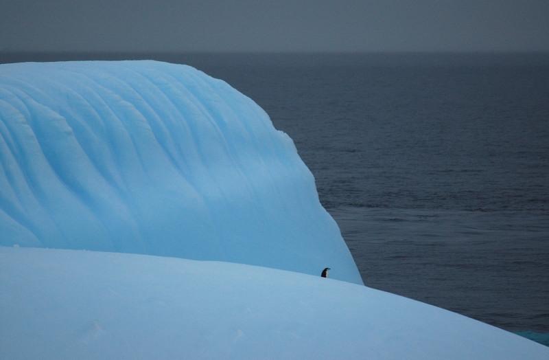 Lonesome penguin