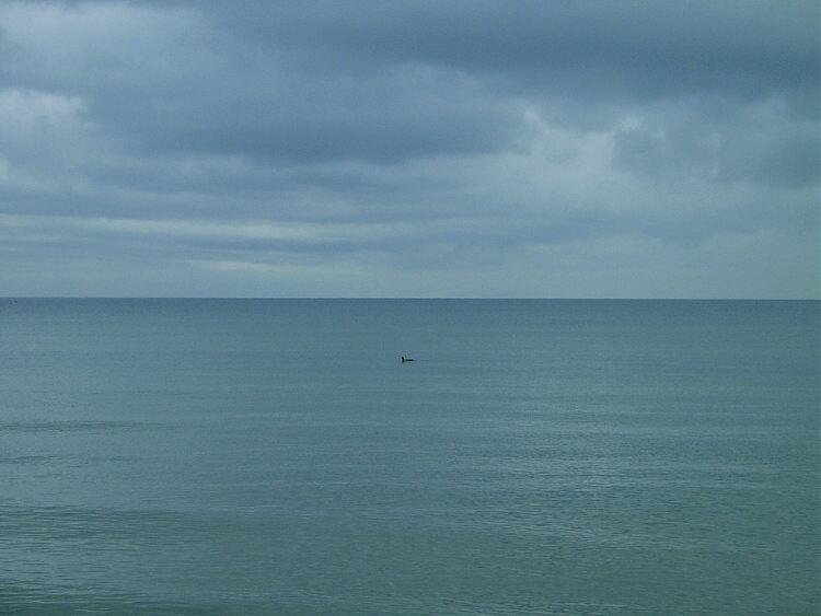 """lonesome sailing bird"""