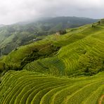 Lóng shèng - rice terraces -