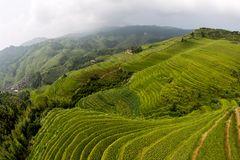 Lóng shèng - rice terraces -