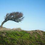 Lonley Tree...