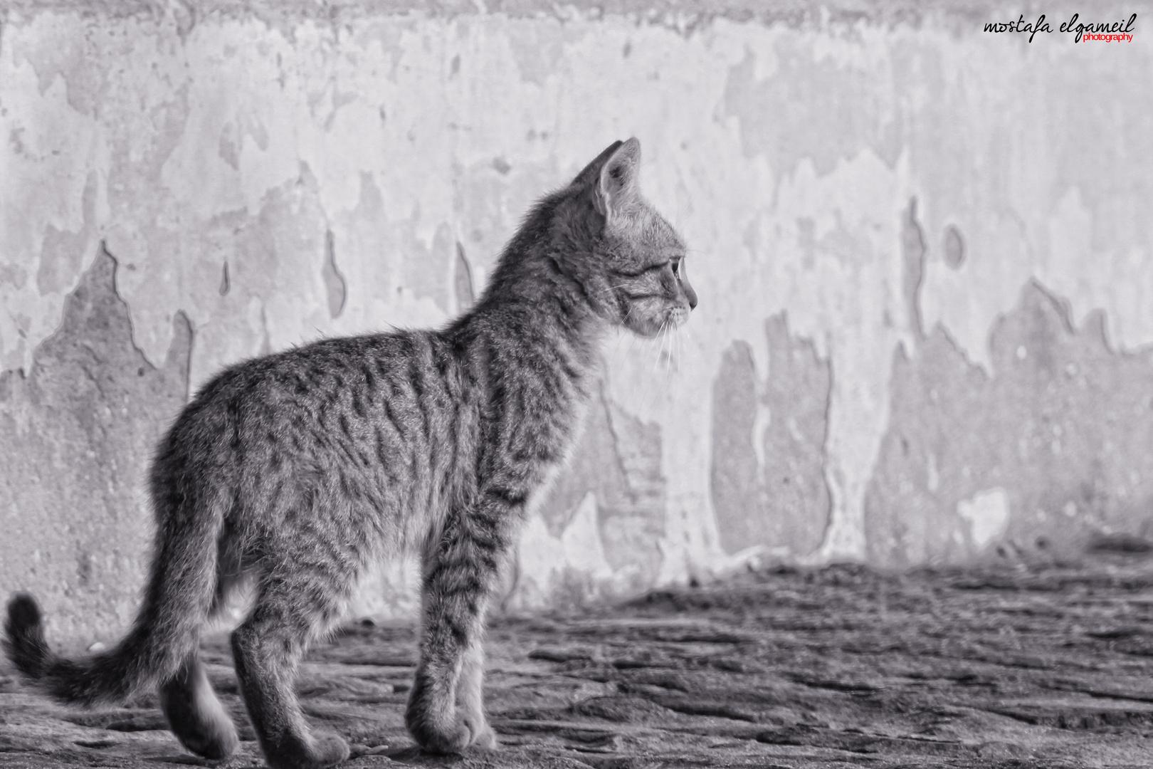 lonly cat