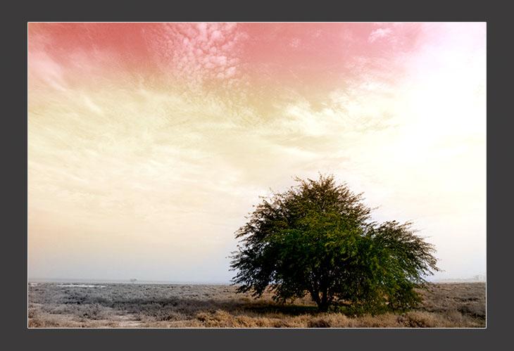 Lonly Tree