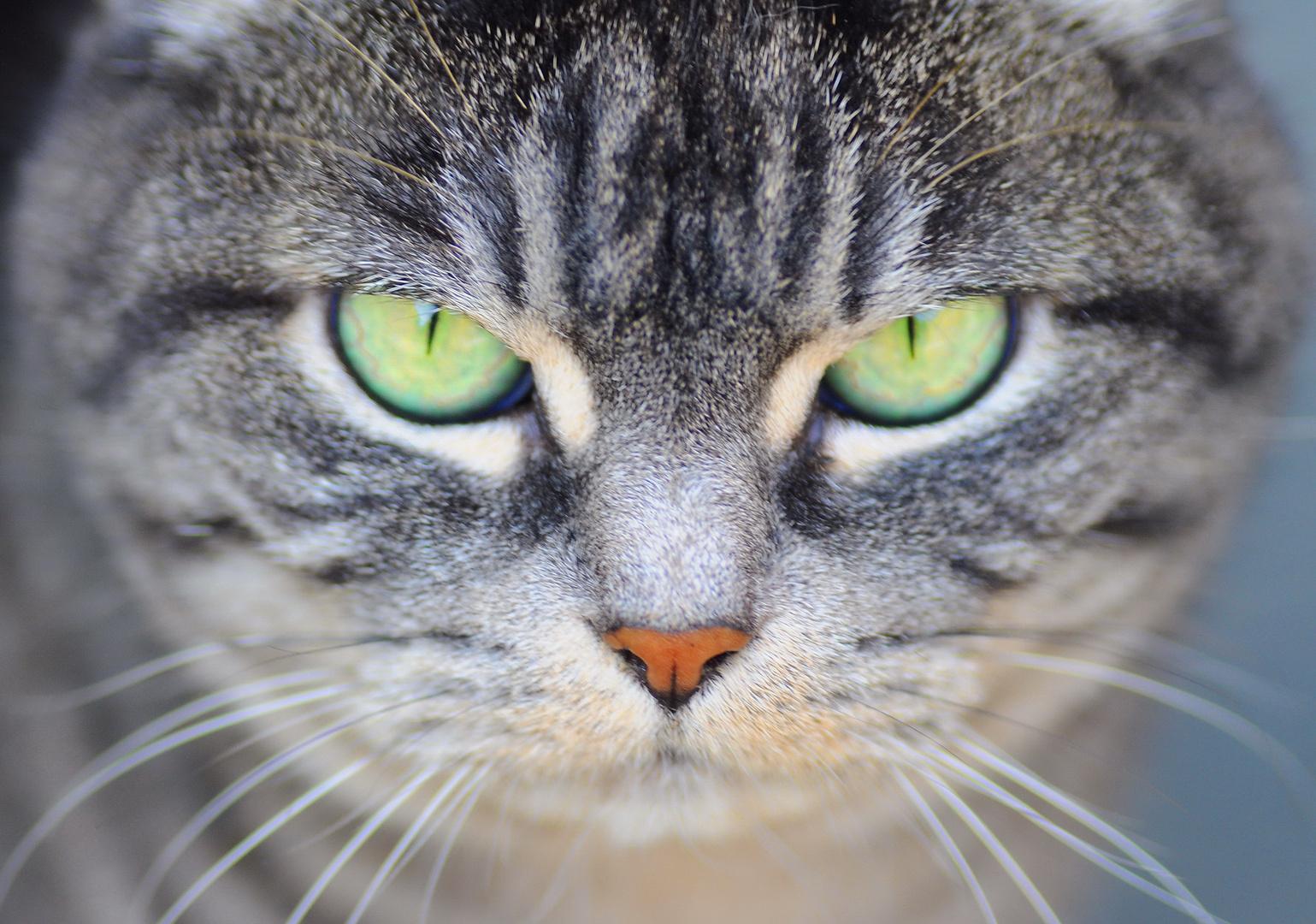 Look me in the eyes...