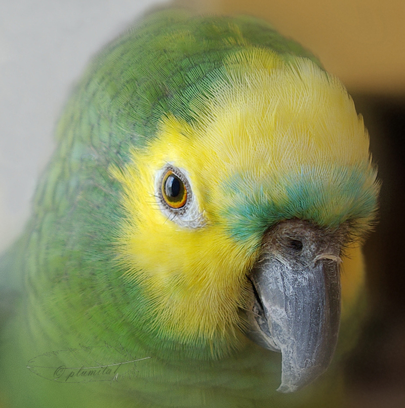 Looking into a parrot's eye
