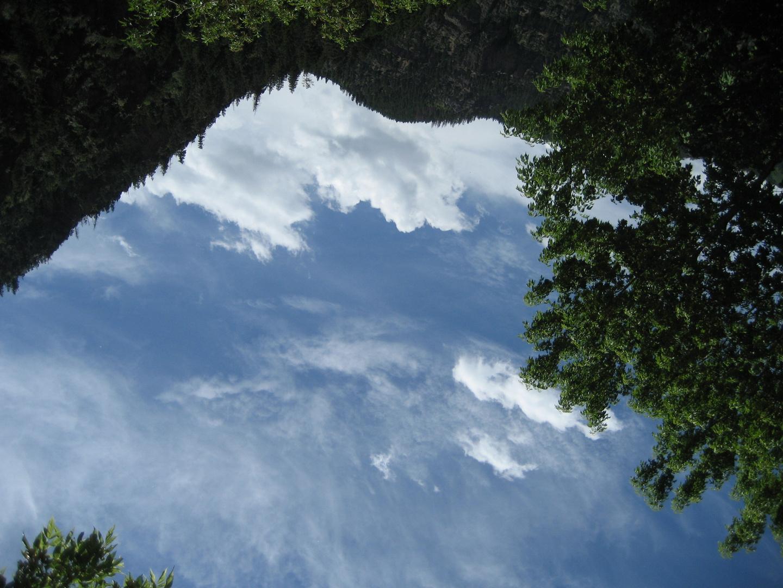 Looking up into the Colorado sky