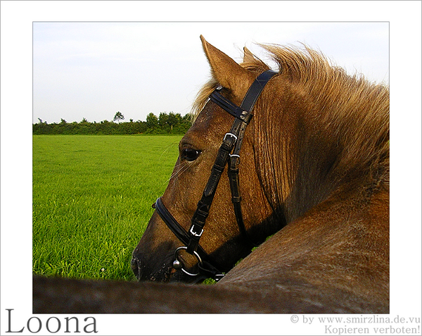Loona - Ponystute