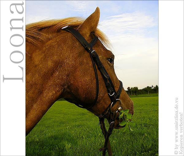 Loona - Ponystute - Teil II