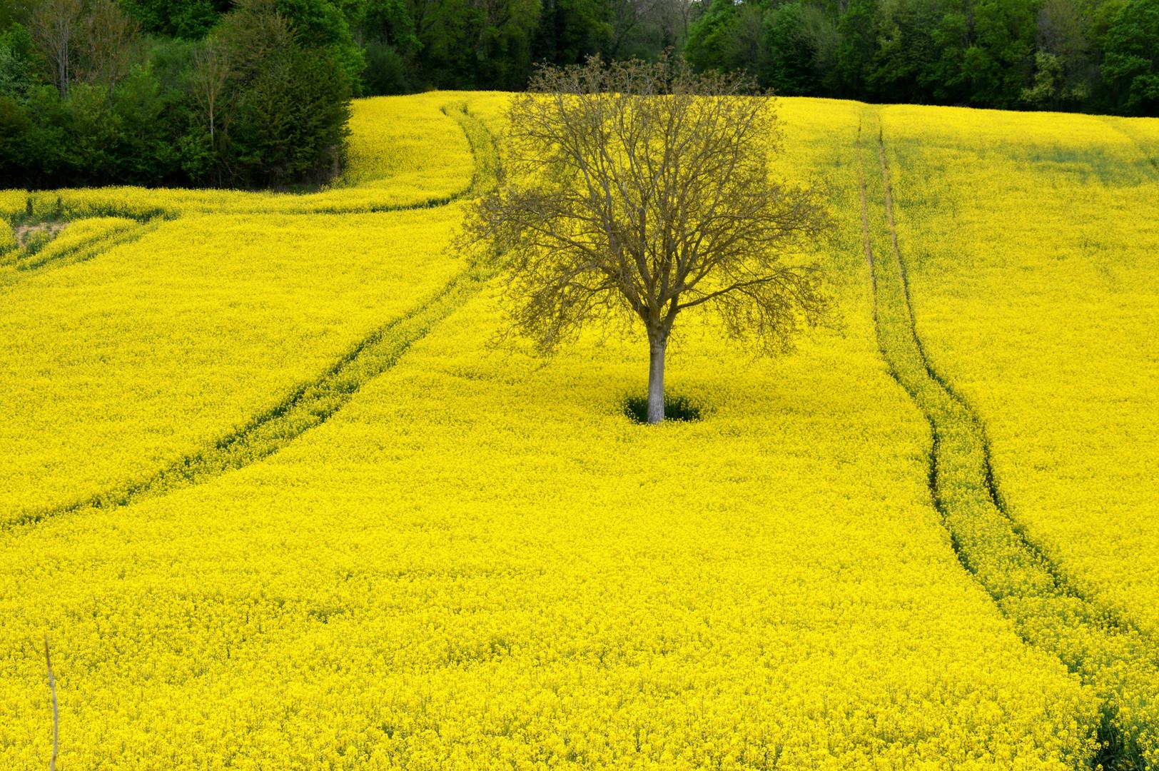 l'or du printemps