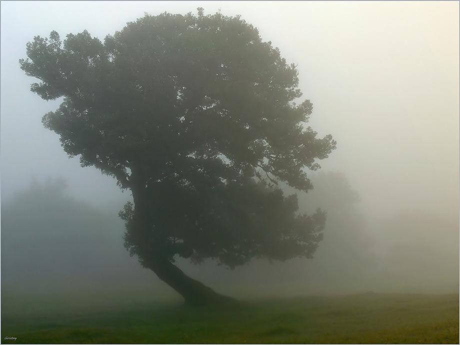 Lorbeer-Bäume ...