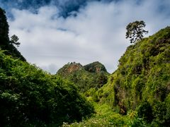 Lorbeerwald von Los Tilos - La Palma