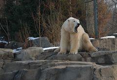 Loriot Bär