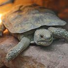 Loriots Nudelsketch jetzt auch für Reptilien!