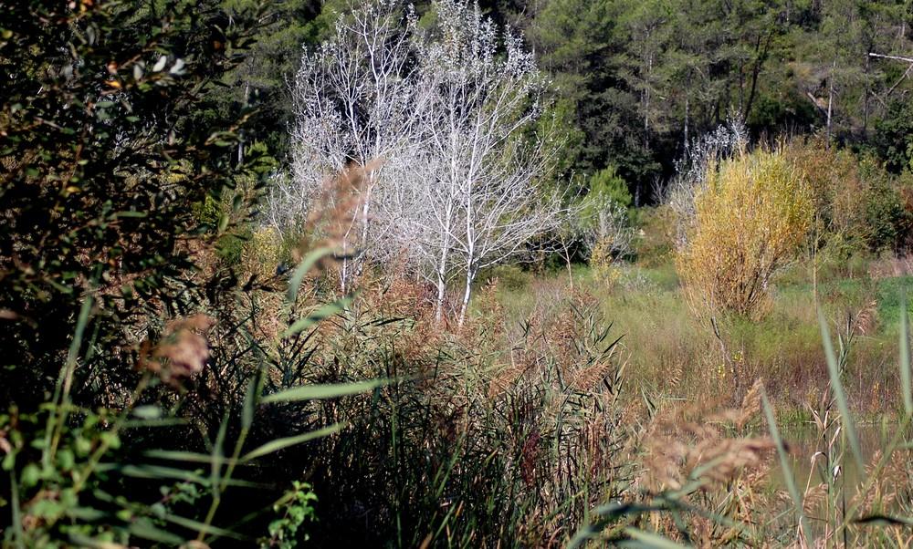 los colores del bosque