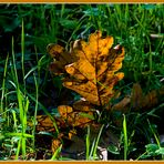 Los colores del otoño 1