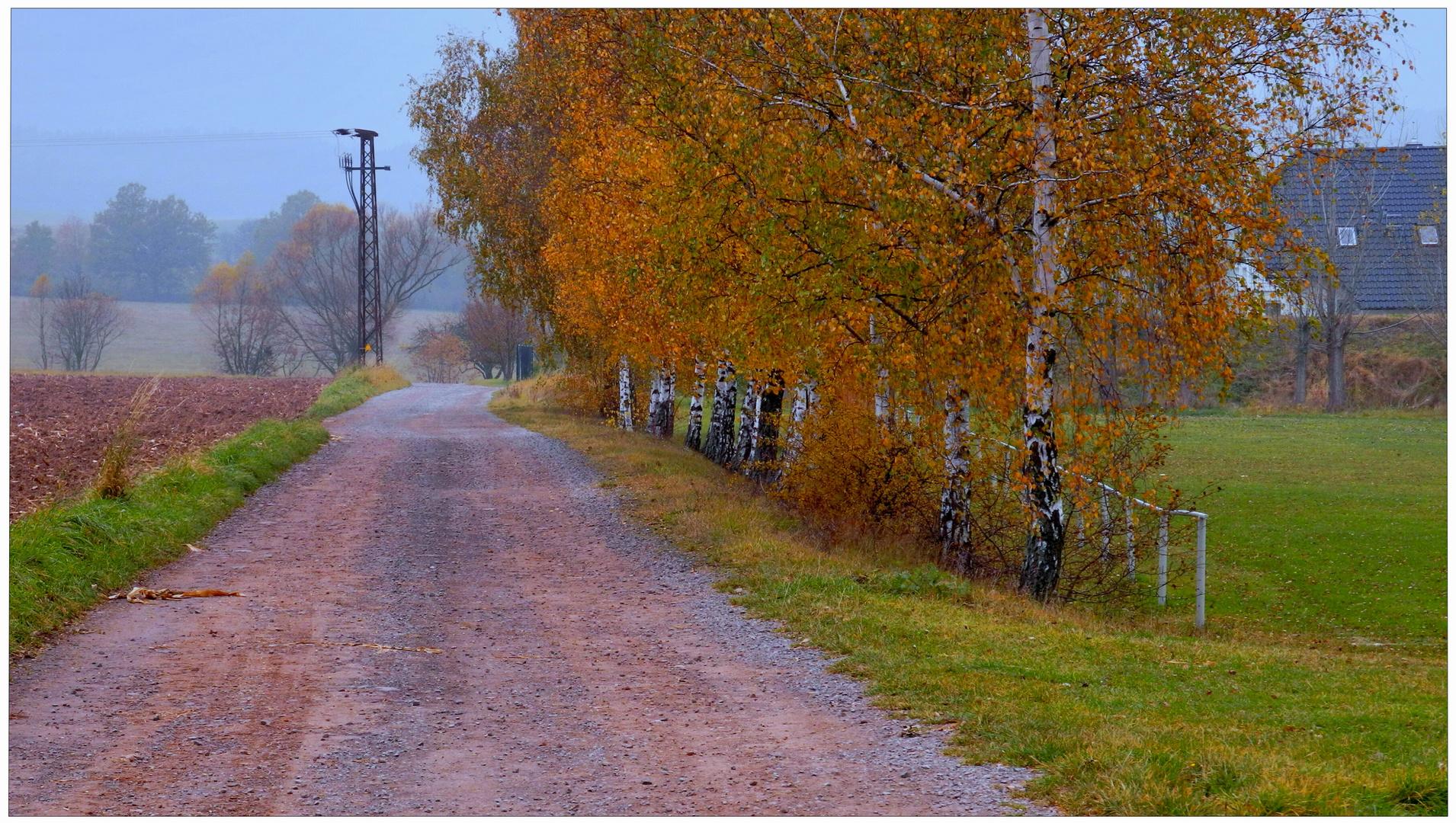 Los colores del otoño V, abedules junto al campo de deportes