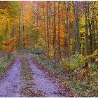 Los colores del otoño VI, camino en el bosque