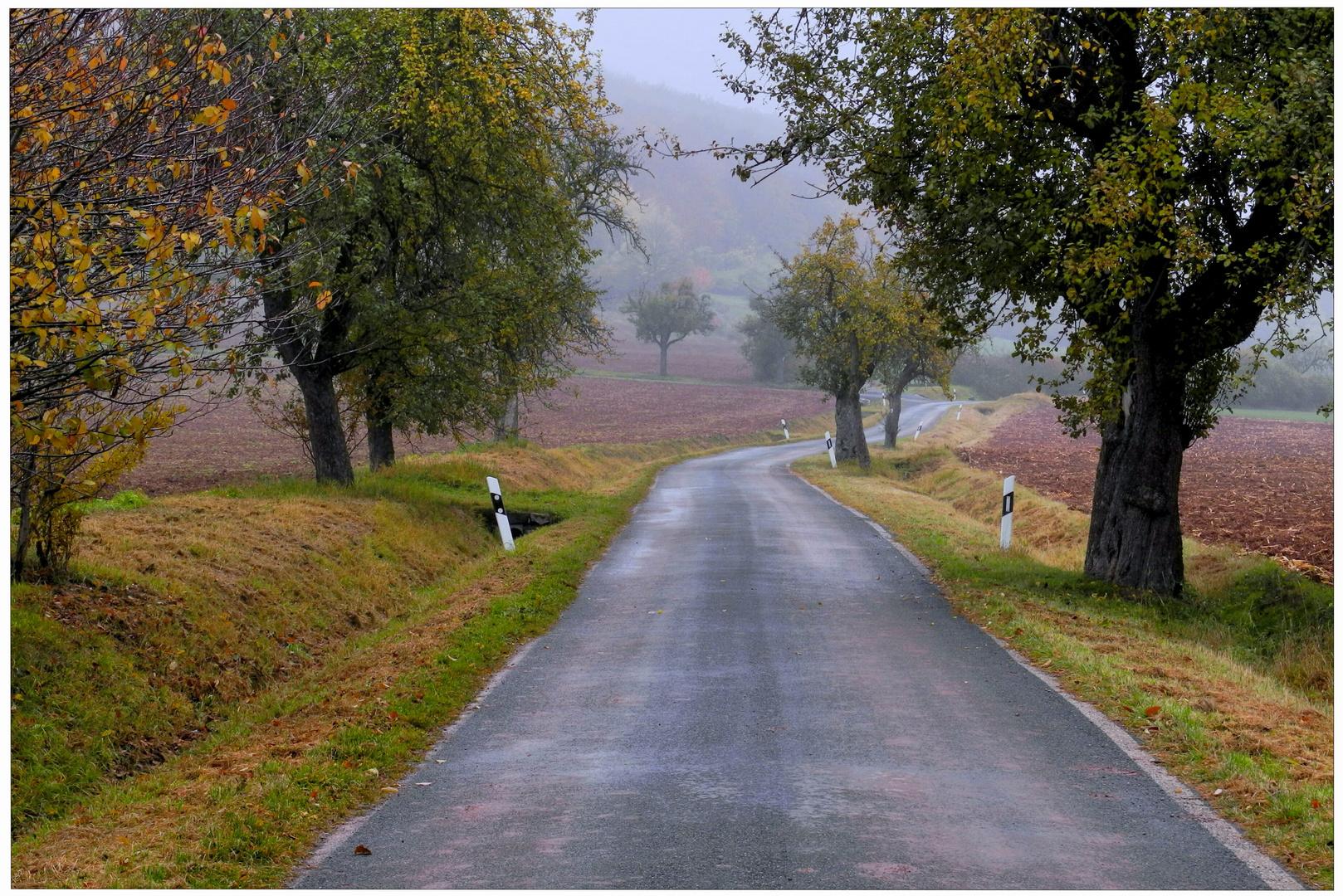 Los colores del otoño VIII, carretera por los campos