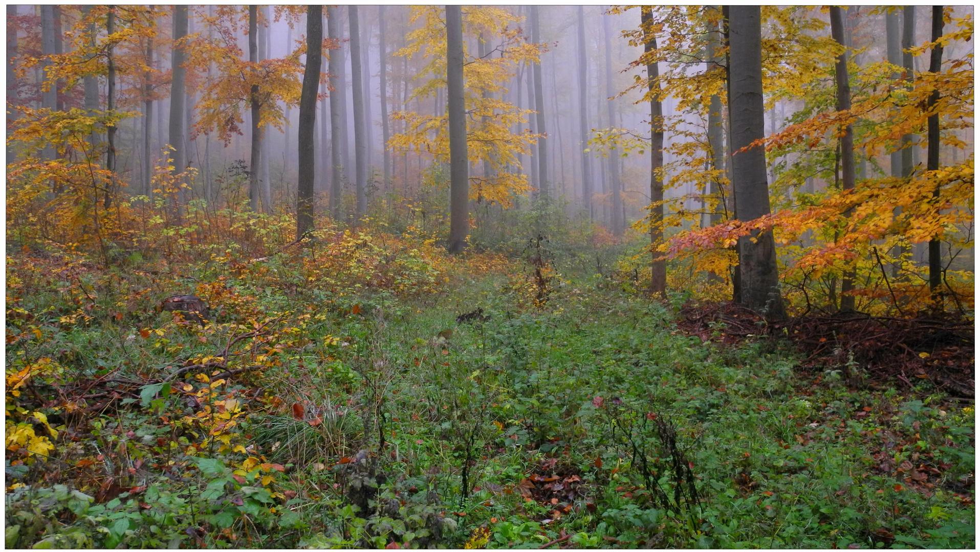 Los colores del otoño XIII, en el bosque