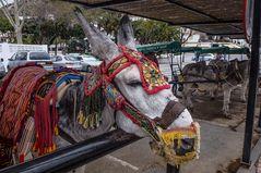 Los famosos burros de Mijas