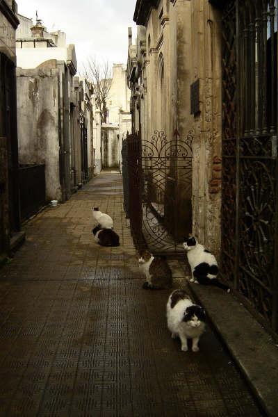 Los gatos del cementerio