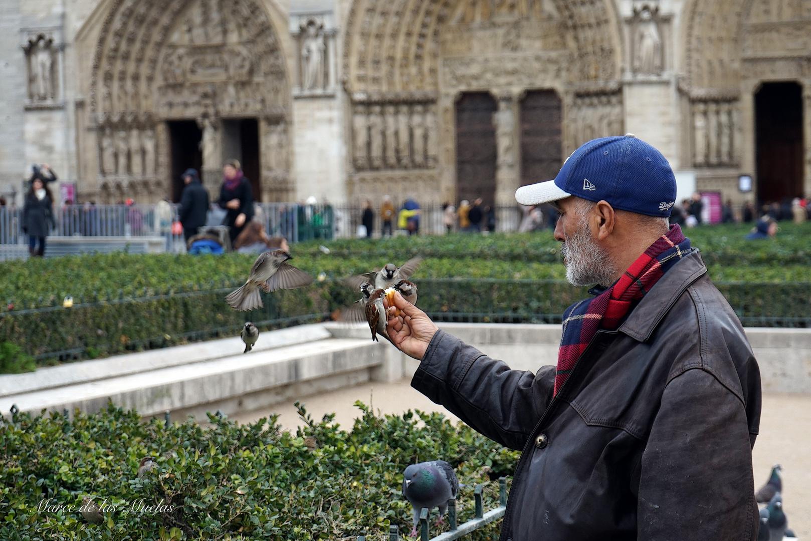 ...los gorriones de Notre Dame...