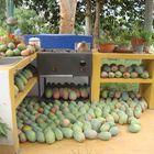 Los Mangos