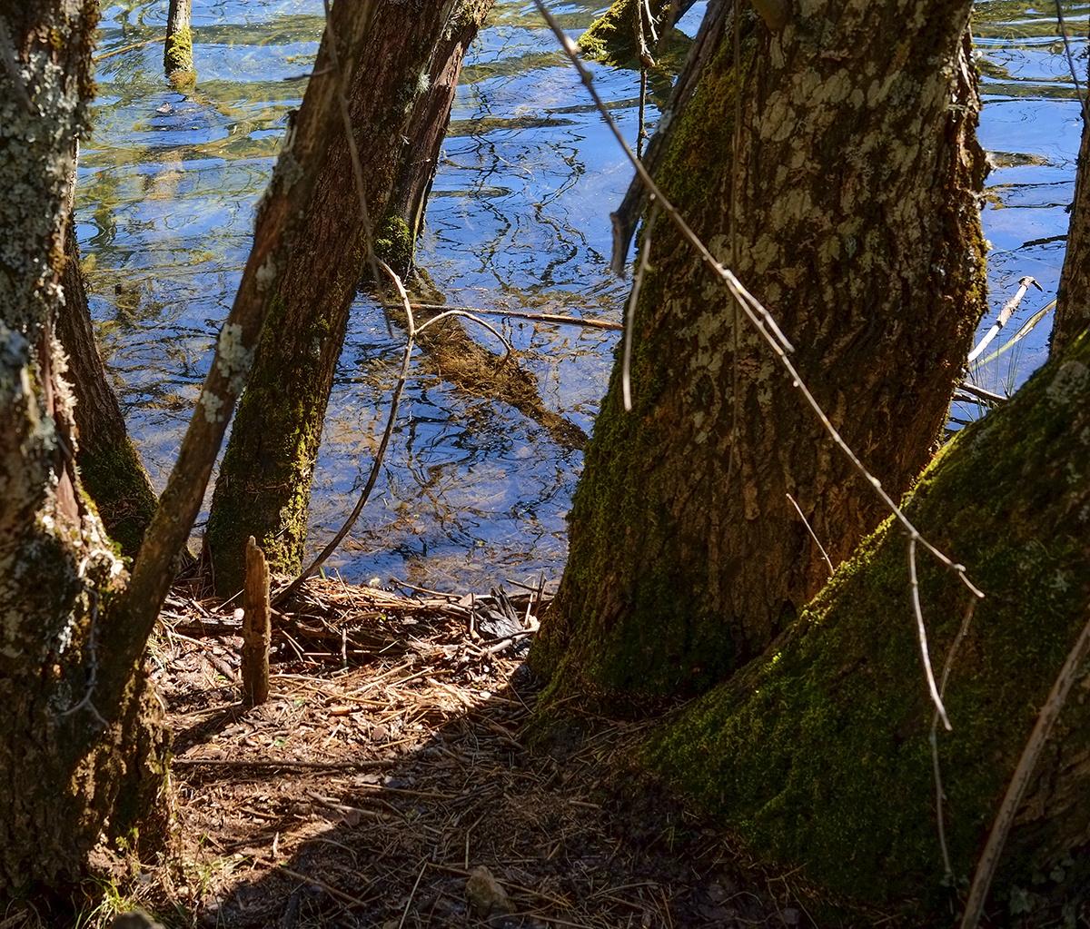 'Los misterios del agua' (4)