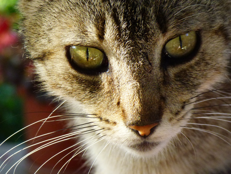 Los ojos de mi Demonia