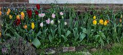 Los tulipanes de Mar Azul