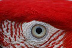 L`osccurita nell`occhio