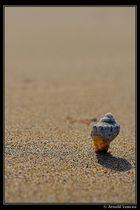 Lost in desert ...