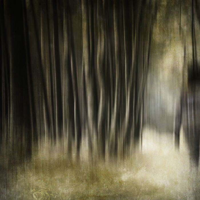 .lost in the deep forest