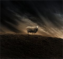 """"""" lost sheep """""""