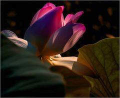 Lotus artistique