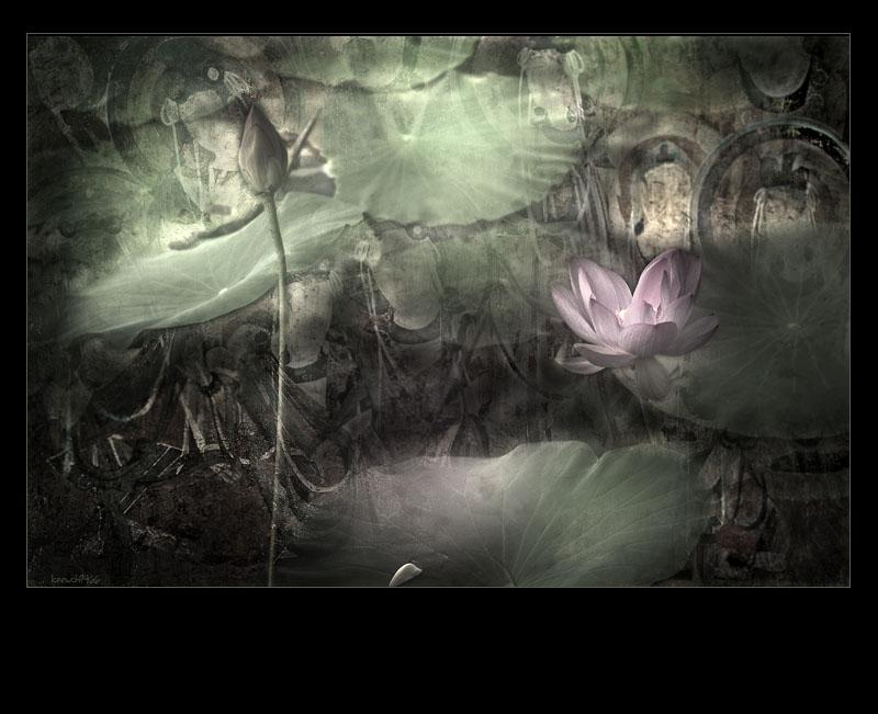 Lotus before Buddha