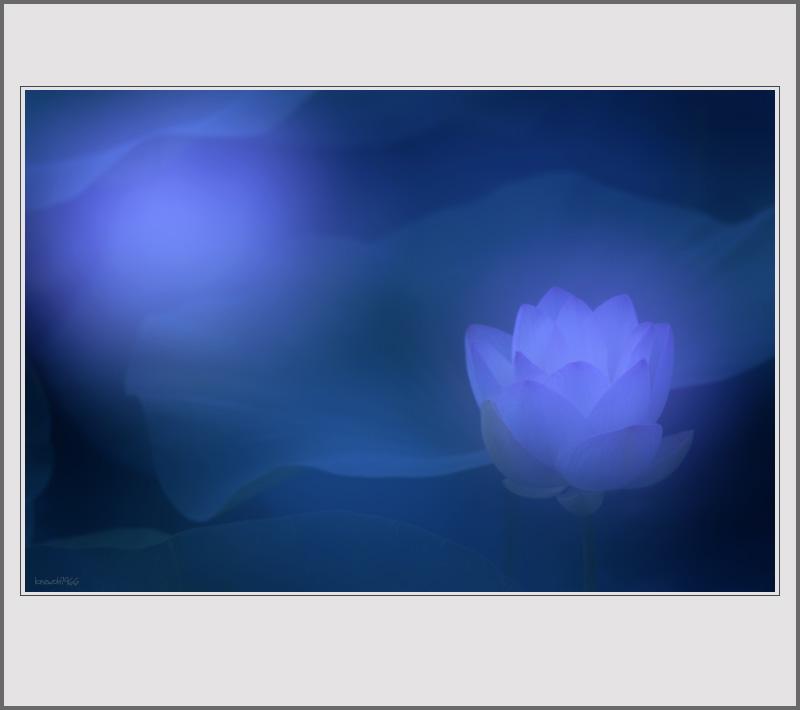 Lotus before Buddha_2