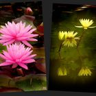 Lotus du Temple-sur-Lot  pour vous.