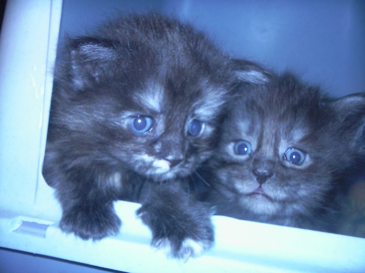 LouLou und Merlin *25.10.2009