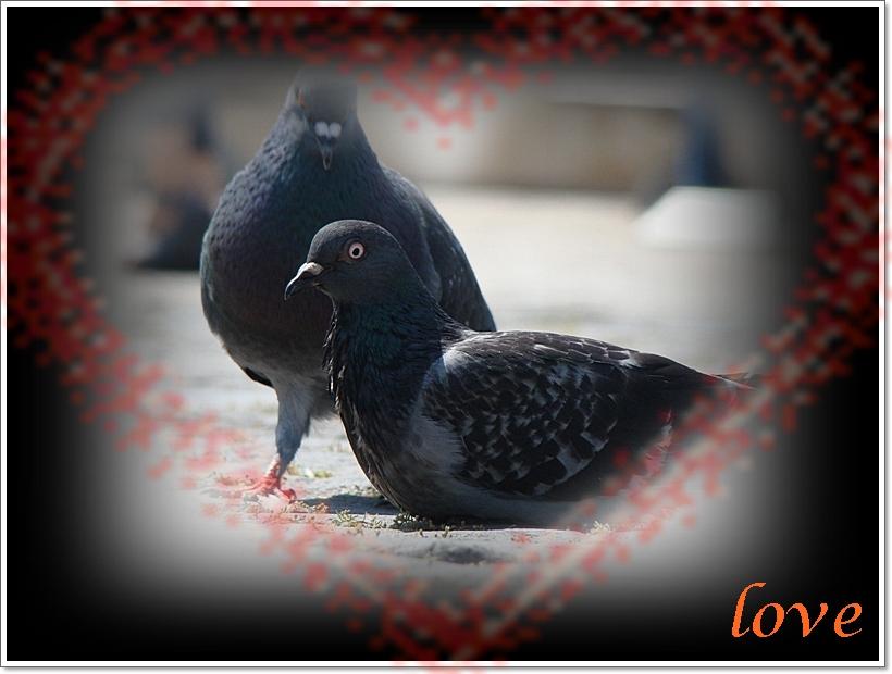 *** LOVE ***
