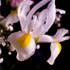 love flower!