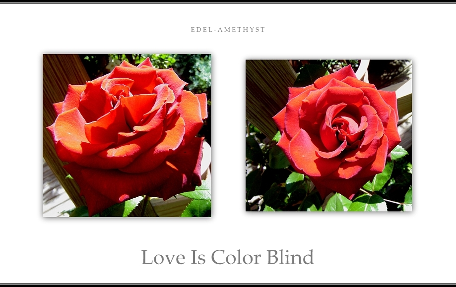 """""""Love Is Color Blind"""""""