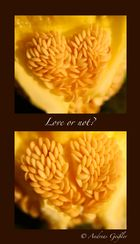 Love or not?