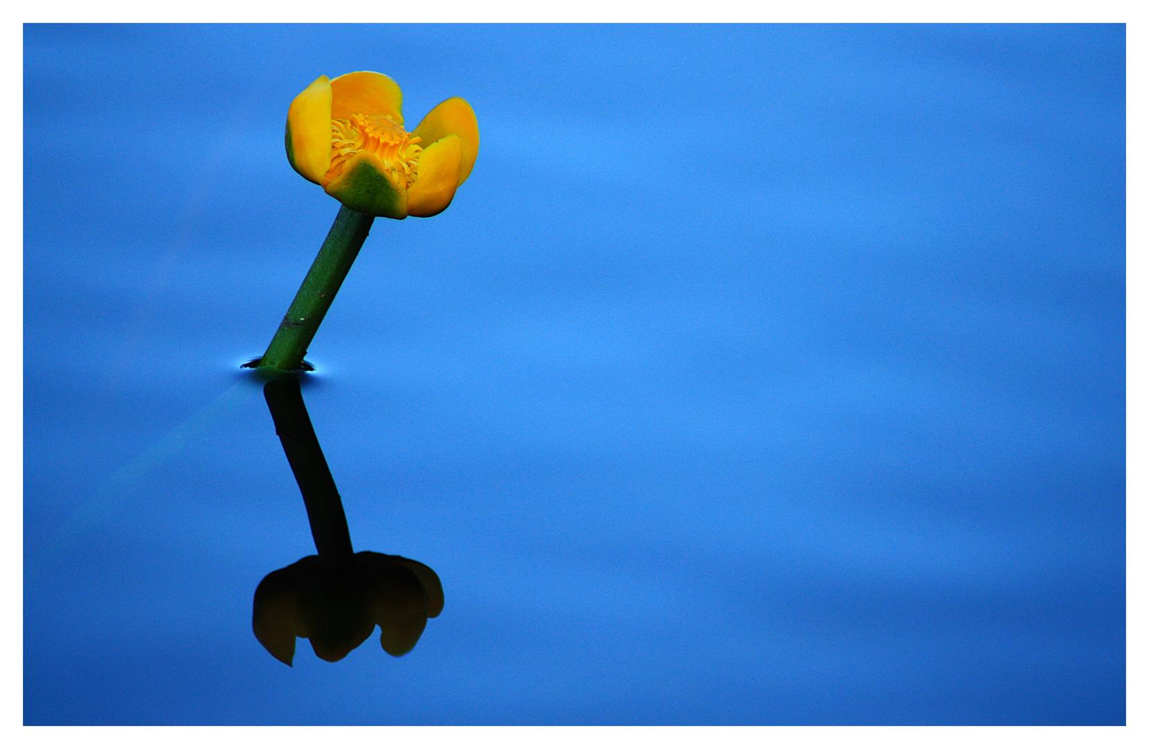 Love reflecting everything