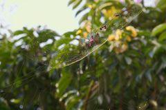 Love Spider