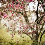 LOVE - Spring!