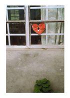 love still hurts