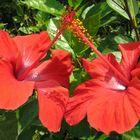 love two flower