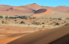 lovely desert