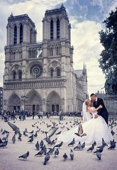 lovers and pigeons